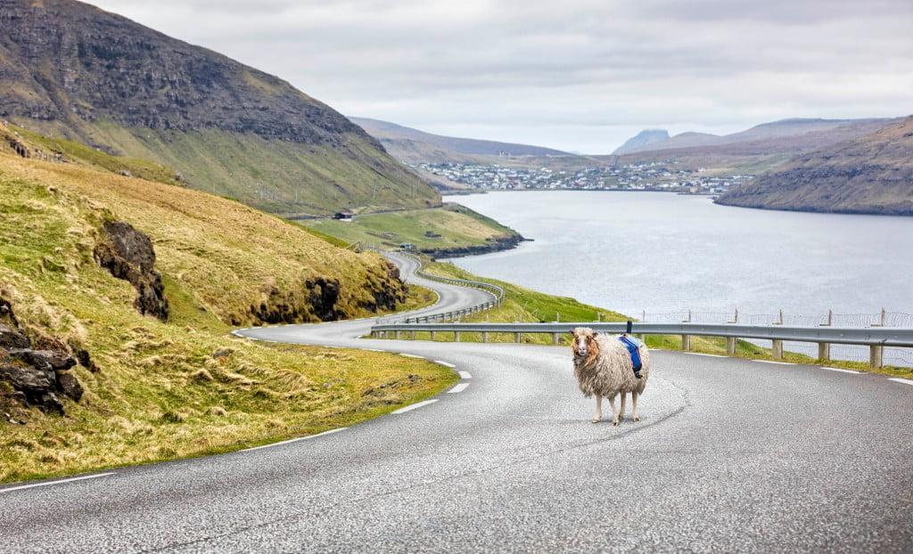 Como as ovelhas mudaram o turismo das Ilhas Faroe